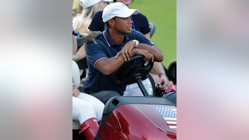 A squirrel sits on the shoulder of Tiger Woods as he watches the last four-ball match of the day at the Presidents Cup golf tournament at Muirfield Village Golf Club Thursday, Oct. 3, 2013, in Dublin, Ohio. Davis Love III found the squirrel earlier in the day and has kept in his cart during the matches. (AP Photo/Jay LaPrete)
