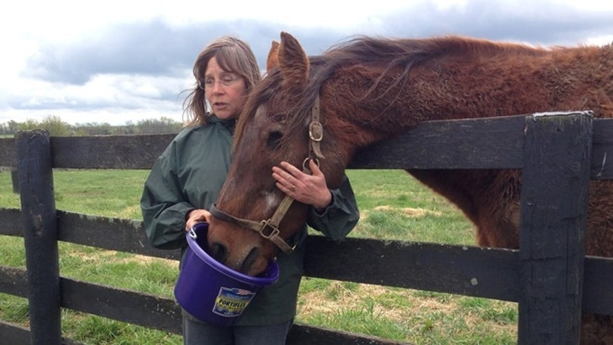 April 25, 2014: Beth Shannon, a volunteer guide at Old Friends farm in Georgetown, Ky., feeds Ogygian some carrots. Ogygian, a 31-year-old former champion racehorse, was brought back from Japan in 2005. (AP/Dylan Lovan)