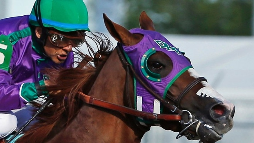 In this May 3, 2014, file photo, jockey Victor Espinoza rides California Chrome to win the 140th running of the Kentucky Derby horse race at Churchill Downs in Louisville, Ky. Chrome might abandon his Triple Crown bid if New York officials do not allow the colt to wear a nasal strip in the Belmont Stakes.