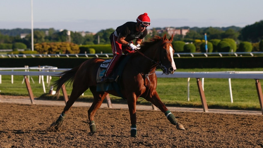 June 6, 2014: California Chrome, winner of the 2014 Kentucky Derby and Preakness Stakes, gallops during morning workouts at Belmont Park in Elmont, New York.