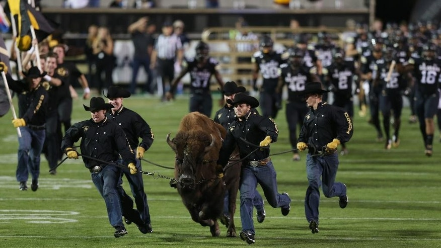 Handlers guide Colorado mascot Ralphie as the bisonl leads members of the Golden Buffaloes onto the gridiron to face Arizona State in an NCAA college football game in Boulder, Colo., on Saturday, Sept. 13, 2014. (AP Photo/David Zalubowski)