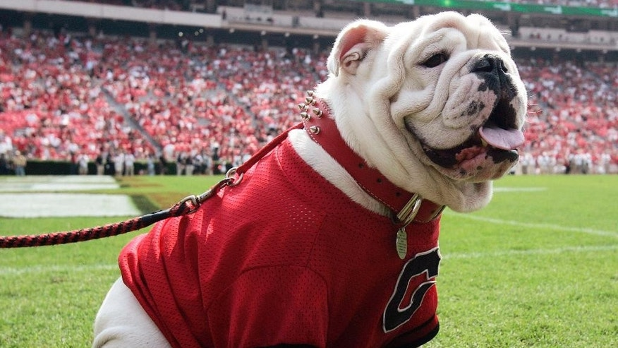 FILE - In this Aug. 30, 2008, file photo, Georgia mascot UGA VII sits on the sideline during the fourth quarter of an NCAA college football game against Georgia Southern in Athens, Ga. The game was UGA VII's first since taking over for his father UGA VI who died during the off season. Georgia's famous bulldog in a red sweater might not be the most imposing mascot, nor is he the wackiest, but you would be hard pressed to find a more famous furry friend roaming the sidelines on a football Saturday. (AP Photo/John Bazemore, File)