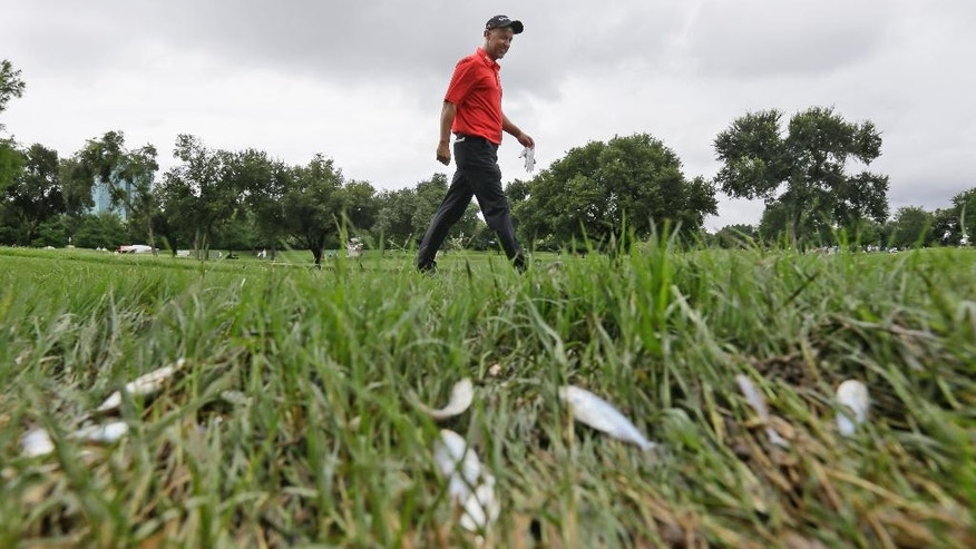 Jimmy Walker watches his approach shot on the 10th hole during the second round of the Byron Nelson golf tournament, Friday, May 29, 2015, in Irving, Texas. (AP Photo/LM Otero)