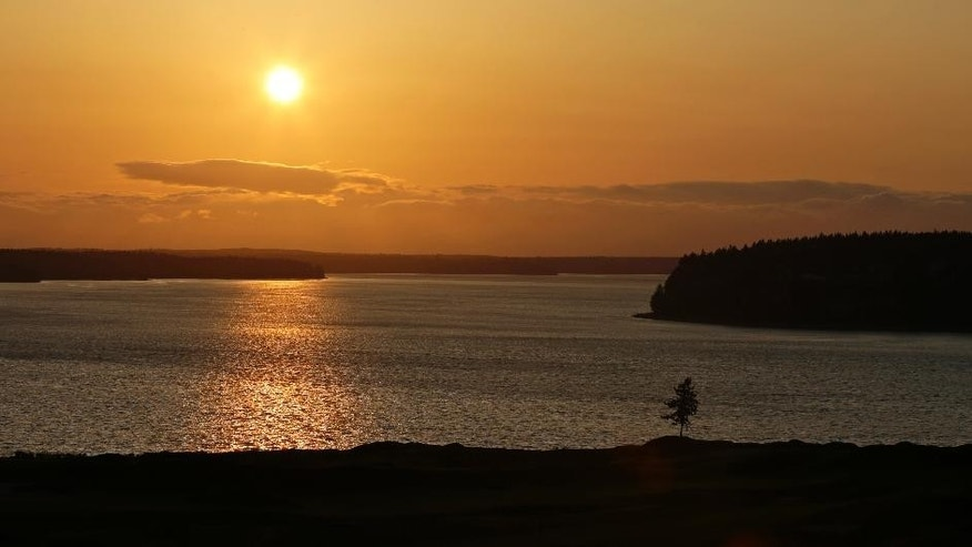 In this April 29, 2015, photo, the signature lone fir tree at Chambers Bay golf course stands at sunset in University Place, Wash. Chambers Bay will host the 115th U.S. Open golf tournament next week, but the course is a mystery to the majority of the players because it opened only eight years ago. (AP Photo/Ted S. Warren)