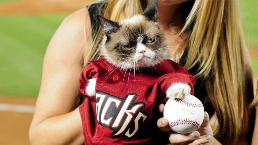 Sep 7, 2015; Phoenix, AZ, USA; Internet personality Grumpy Cat poses with the first pitch ball prior to the game between the Arizona Diamondbacks and the San Francisco Giants at Chase Field. Mandatory Credit: Matt Kartozian-USA TODAY Sports