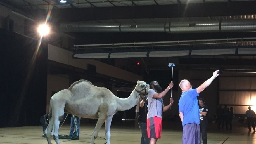"James Harden takes a selfie with a camel at Foot Locker's ""Play My Tweet"" event"