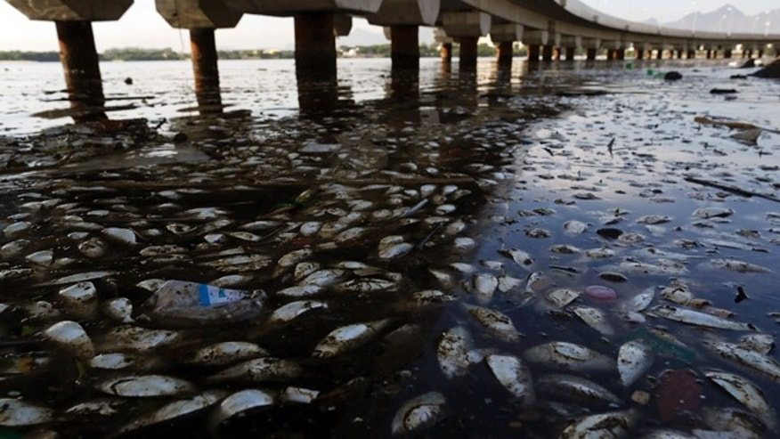 FILE - In this Feb. 25, 2015 file photo, dead fish and trash float in the polluted Guanabara Bay in Rio de Janeiro, Brazil. Rio de Janeiro's Olympic organizing committee ruled out conducting viral tests of the human sewage-laden waterways where the 2016 Games' aquatic events will be held, following recommendations from the World Health Organization, Rio 2016 spokesman Mario Andrada said Friday, Oct. 16, 2015. (AP Photo/Leo Correa, File)