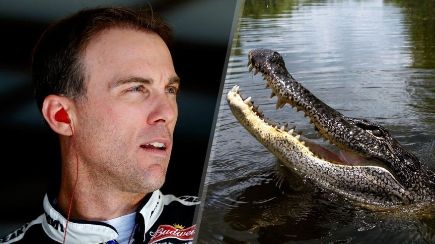 Kevin Harvick, driver of the #4 Jimmy John's / Budweiser Chevrolet, stands in the garage area during practice for the NASCAR Sprint Cup Series MyAFibRisk.com 400 at Chicagoland Speedway on September 19, 2015 in Joliet, Illinois. (Photo by Jonathan Ferrey/Getty Images) An alligator swims in the Atchafalaya Basin near Henderson, Louisiana Saturday, June 30, 2012. (David Grunfeld/MCT via Getty Images)