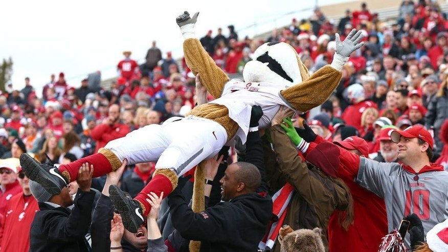 Dec 21, 2013; Albuquerque, NM, USA; Washington State Cougars mascot Butch celebrates in the crowd after a touchdown in the first quarter against the Colorado State Rams during the Gildan New Mexico Bowl at University Stadium. Mandatory Credit: Mark J. Rebilas-USA TODAY Sports