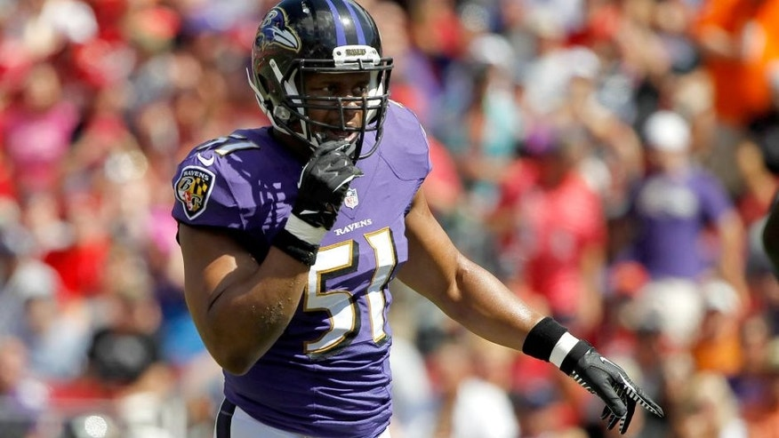 Oct 12, 2014; Tampa, FL, USA; Baltimore Ravens inside linebacker Daryl Smith (51) during the first quarter against the Tampa Bay Buccaneers at Raymond James Stadium. Mandatory Credit: Kim Klement-USA TODAY Sports