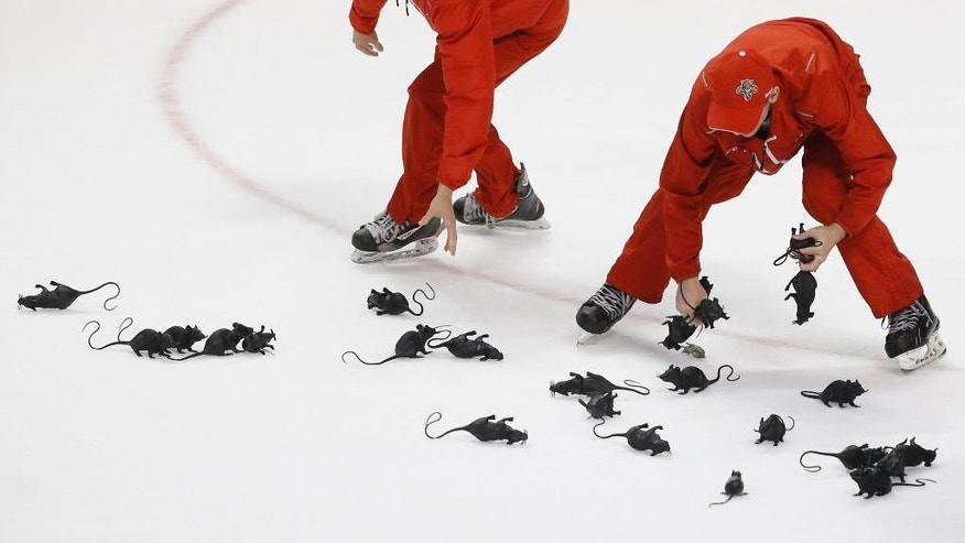 FILE - In this Friday, April 15, 2016, crews round up rats thrown on the ice by fans after Florida Panthers defenseman Dmitry Kulikov scored an empty-net goal during the third period of Game 2 in a first-round NHL hockey Stanley Cup playoff series against the New York Islanders in Sunrise, Fla. The Panthers defeated the Islanders 3-1. (AP Photo/Wilfredo Lee, File-