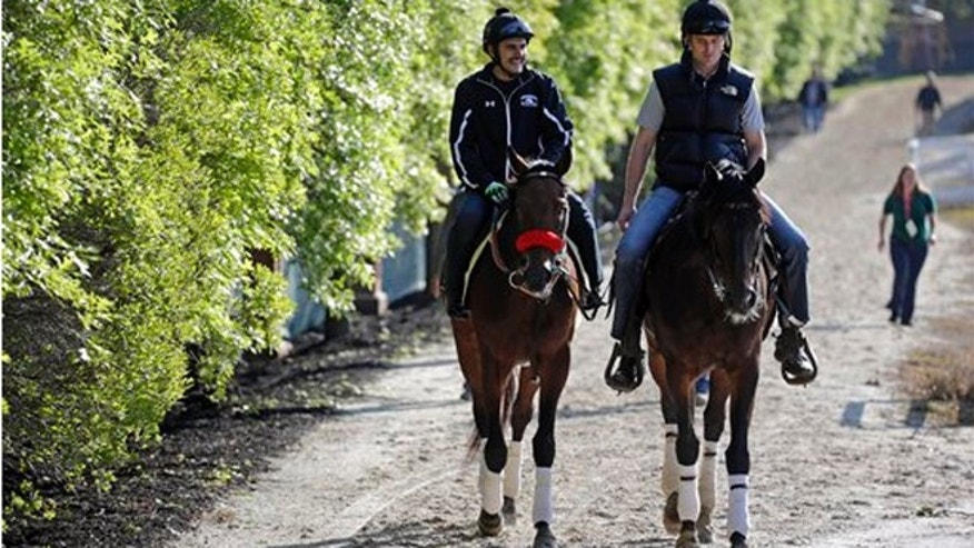 Kentucky Derby winner Nyquist, left, ridden by exercise rider Jonny Garcia, walks to the barns alongside an outrider at Pimlico Race Course in Baltimore, Friday, May 20, 2016. (AP Photo/Patrick Semansky)