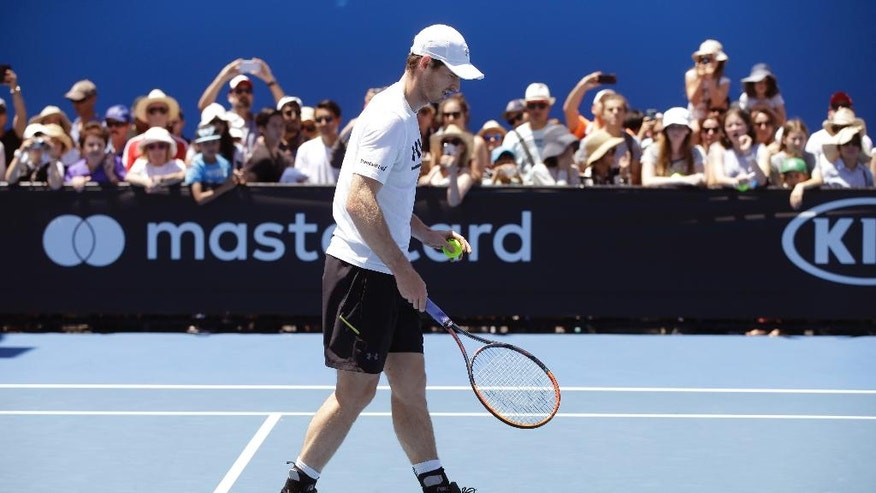 Britain's Andy Murray gathers a ball during a practice session at the Australian Open tennis championships in Melbourne, Australia, Thursday, Jan. 19, 2017. Murray will play United States' Sam Querrey in third round match on Friday, Jan. 20. (AP Photo/Dita Alangkara)