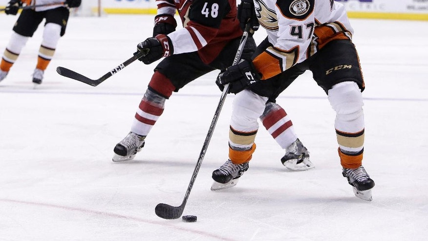 Anaheim Ducks defenseman Hampus Lindholm (47) skates with the puck in front of Arizona Coyotes left wing Jordan Martinook in the first period during an NHL hockey game, Monday, Feb. 20, 2017, in Glendale, Ariz. (AP Photo/Rick Scuteri)