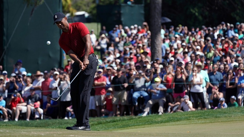 Tiger Woods chips to the 4th hole during the final round of the Valspar Championship golf tournament at Innisbrook Resort in Florida Sunday.