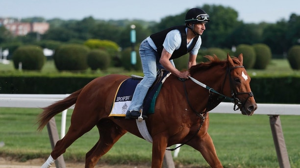 Belmont Stakes hopeful Hofburg gallops around the track during a workout at Belmont Park, Wednesday, June 6, 2018, in Elmont, N.Y. Hofburg is one of 10 horses racing in the 150th running of the Belmont Stakes horse race on Saturday. (AP Photo/Julie Jacobson)