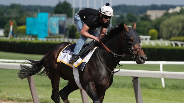 Belmont Stakes hopeful Gronkowski gallops around the track at Belmont Park, Wednesday, June 6, 2018, in Elmont, N.Y. Gronkowski is one of 10 horses racing in the 150th running of the Belmont Stakes horse race on Saturday. (AP Photo/Julie Jacobson)