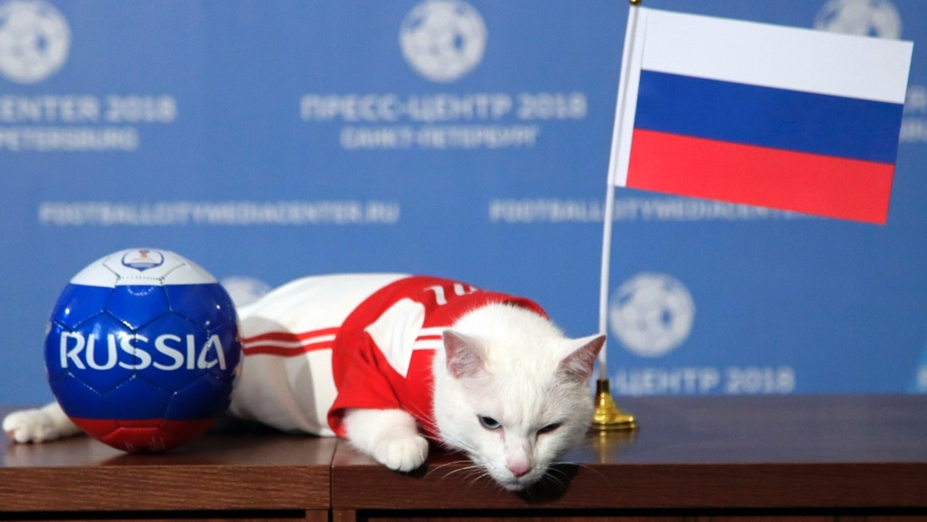 Psychic Cat Predicts Soccer Game Winner