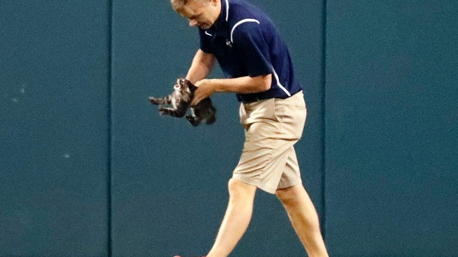 Groundskeeper Lucas Hackmann was hit on the head by a pitch Sunday. Last year, the same groundskeeper was tasked with removing a cat who wandered onto the field.