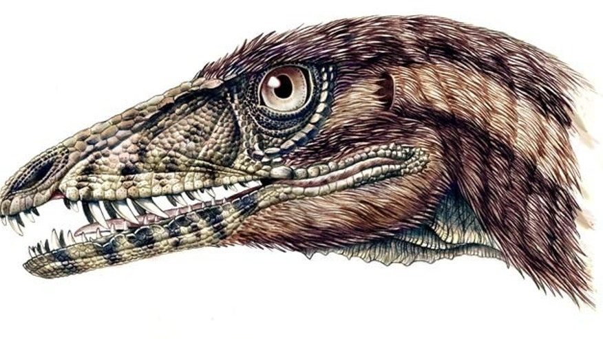 The snout of the newly identified dinosaur, Tawa hallae, is likely covered with scale-like structures, with primitive feathers covering its head and body, as shown in this reconstruction of the dinosaur's head.