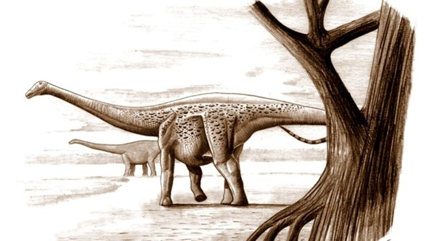 The dwarf dinosaur, Magyarosaurus dacus, which lived in what is now Transylvania, was about the size of a horse and weighed some 230 pounds. Its giant relatives could weigh up to 220,000 pounds.