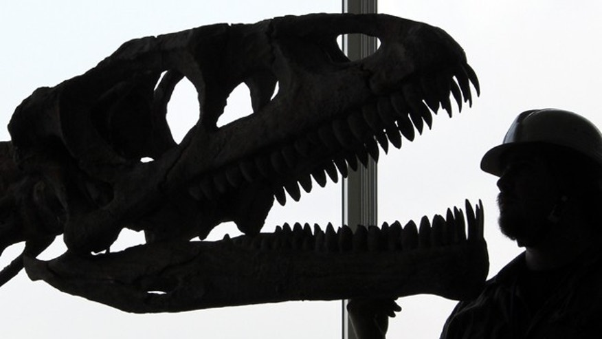 "The skull replica of dinosaur ""Lessemsaurus sauropoides"" is silhouetted as it is put together with its rest of the skeleton by Argentine Museum of Natural Sciences engineer Renzo Dario Arce in preparation for ""the Dawn of the Dinosaurs"" exhibition in Tokyo, Friday, July 2, 2010."