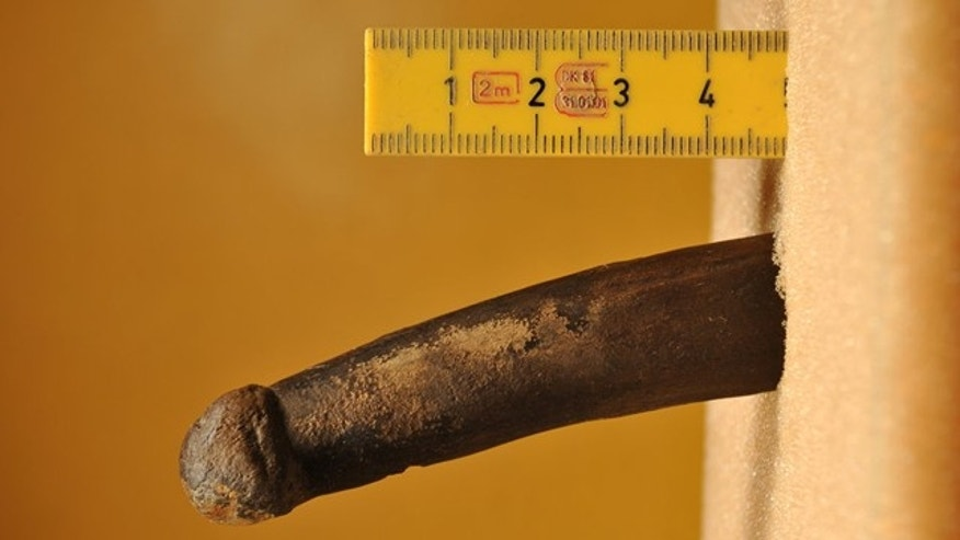 This bone carving from Stone Age Sweden could be an ancient dildo, scientists say. Then again, it might just be a carving tool.