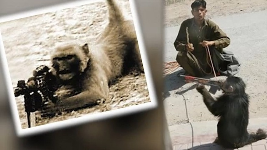 Taliban insurgents are allegedly training monkeys and baboons to shoot U.S. and NATO soldiers in Afghanistan.