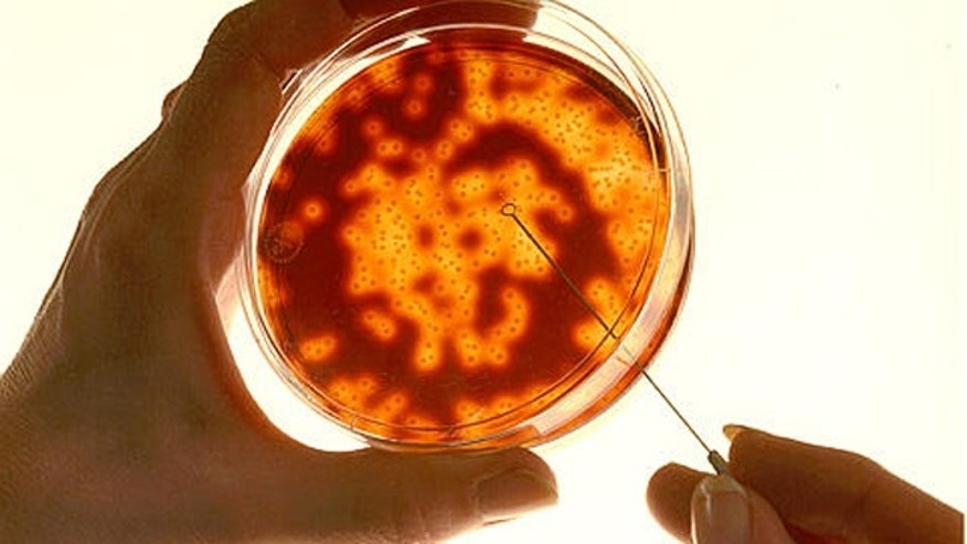 Growing meat in a laboratory ni a petri dish like this one may be the only way to boost the world's beef supplies, scientists said.