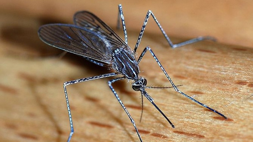 Around 40 percent of the world's population is at risk of malaria, often transmitted through mosquito bites.