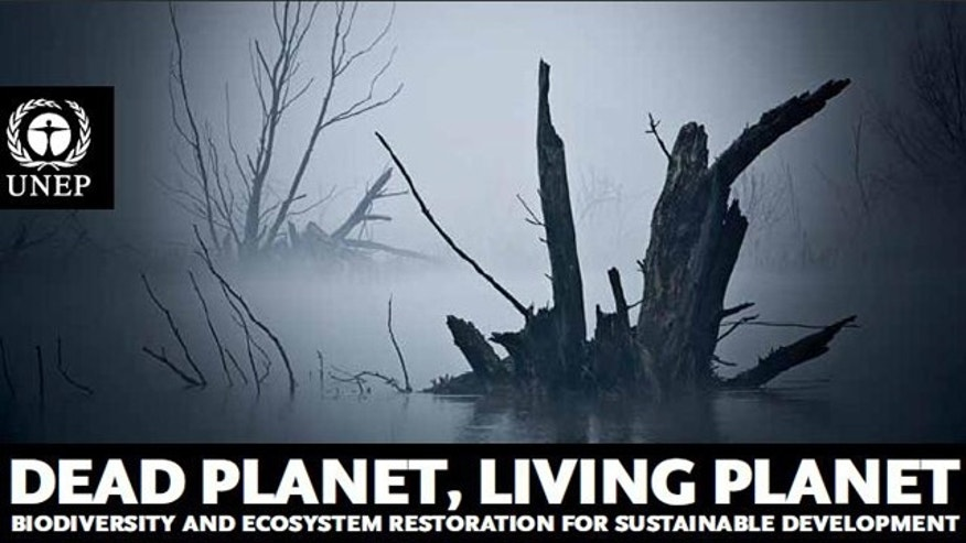A recent U.N. biodiversity study said global environmental damage caused by human activity in 2008 totaled $6.6 trillion.