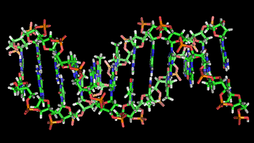 An illustration of the double-helix structure of a strand of DNA.