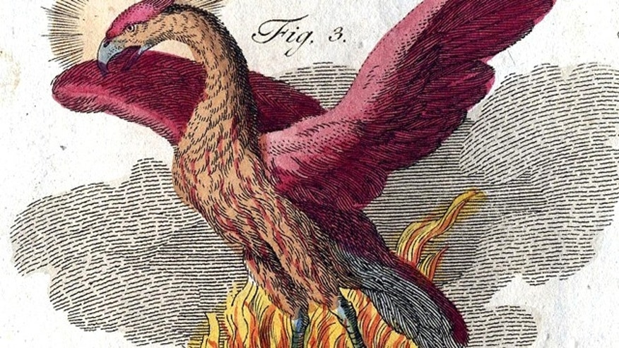 The mythical Phoenix -- which was reborn from fire and ashes every thousand years -- is depicted in the book of mythological creatures by F.J. Bertuch (1747-1822).