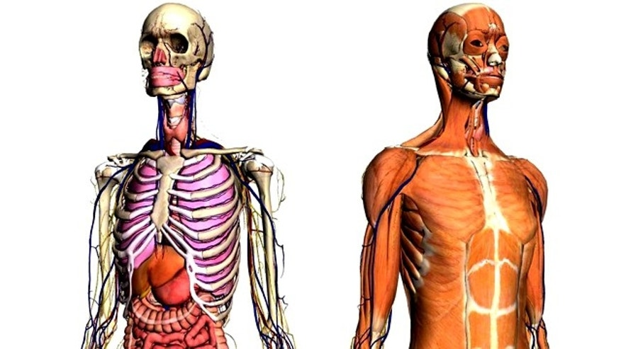 With Google's new Body Browser, you can unravel the human body and -- of course -- search for any organ or bodily structure.
