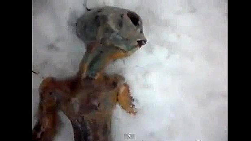 "A YouTube video that purports to show a dead alien ""discovered"" in Siberia has been viewed nearly 1.5 million times."