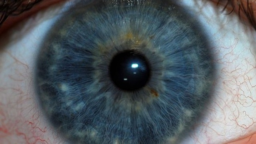 Iris scanners take note of over 200 unique characteristics of the eye to identify an individual.