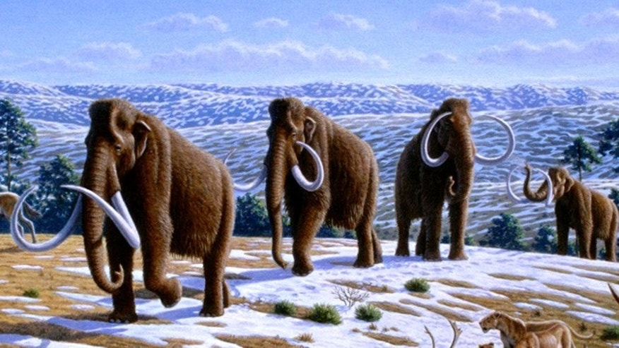 An artist's illustration depicts a herd of woolly mammoths.