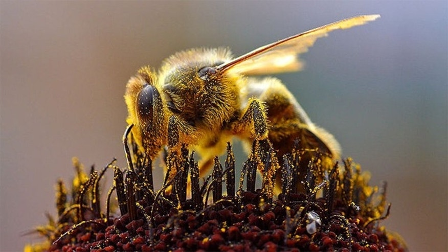 Are cell phones the source of the bee problem?