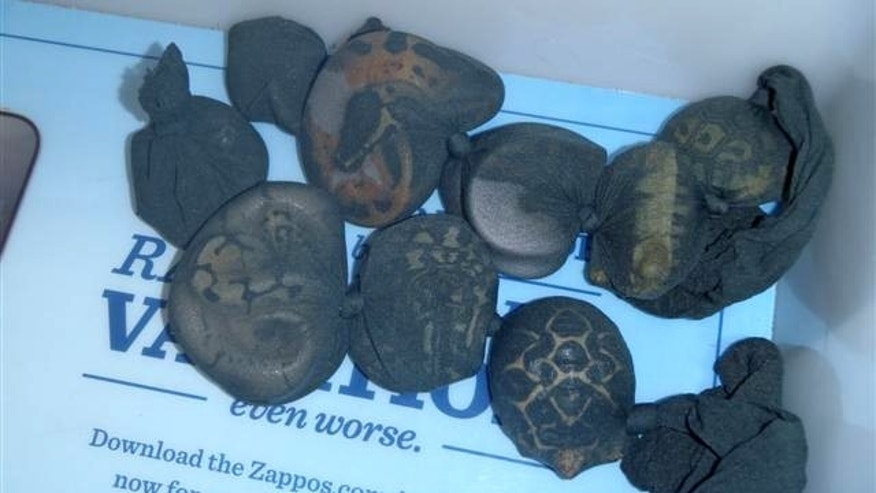A TSA screening revealed seven exotic snakes and three tortoises held in nylon bags that a traveler had concealed inside his pants.