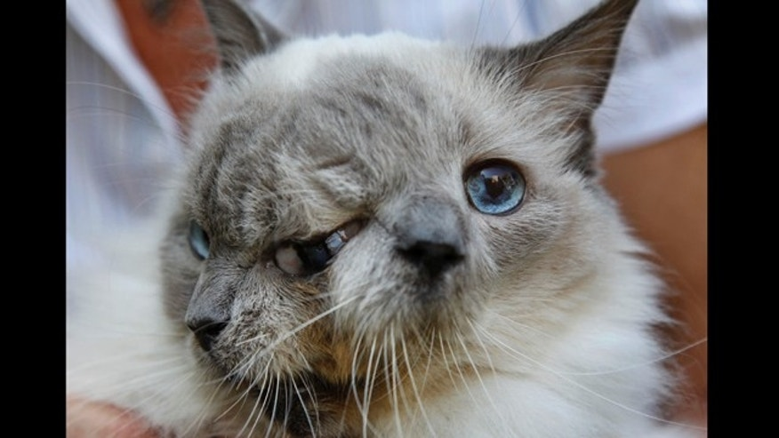 Sept. 28, 2011: A cat with two faces, named Frank and Louie, one name for each face, is held by the cats owner, who identified herself only as Marty, at their home in Worcester, Mass.