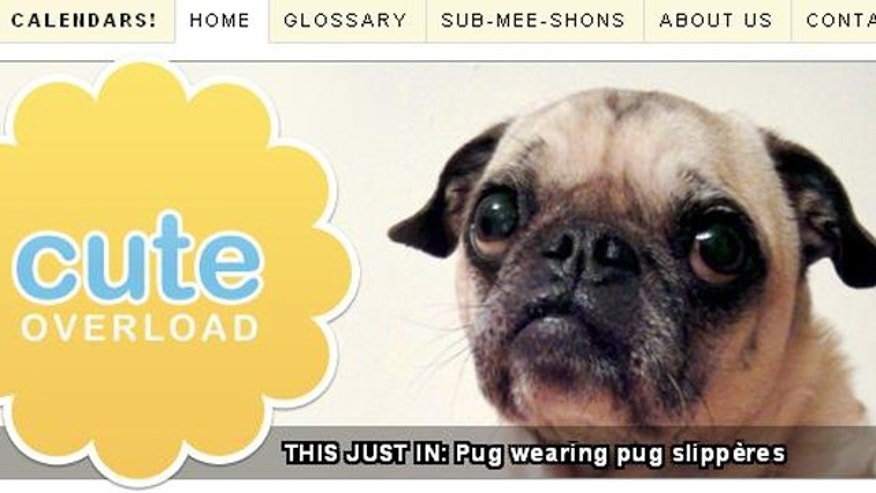 A screenshot of the Cute Overload website, which features a continuous stream of adorable animals.