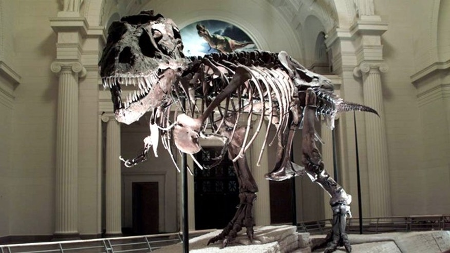 A head-on confrontation with this T. rex named SUE would not be pretty. Scientists aren't sure whether the specimen came from a male or female, though they named it after Sue Hendrickson who discovered it.