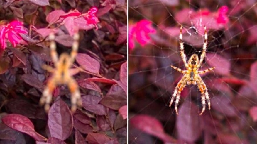 This is a subject you don't want to get close to. This scary spider was re-focused after the photo was taken.