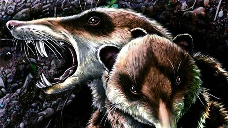 An illustration of the saber-toothed squirrel-like mammal known as Cronopio dentiacutus reveals the creature&#39&#x3b;s striking resemblance to Scrat in the film &quot&#x3b;Ice Age.&quot&#x3b;
