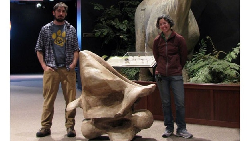 Nate Carroll, left, and Liz Freedman, a doctoral student in Jack Horner's paleontology laboratory, pose with the complete reconstruction of the neck vertebra of an Alamosaurus.