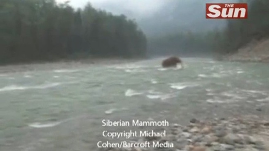 Screen grab of video showing alleged woolly mammoth crossing a river in Siberia.