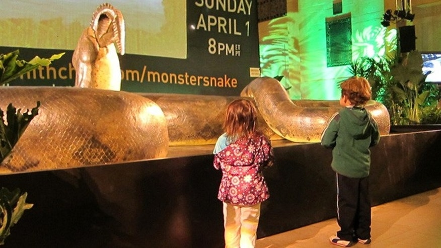 Visiting kids were mesmerized by the sight of the giant snake.