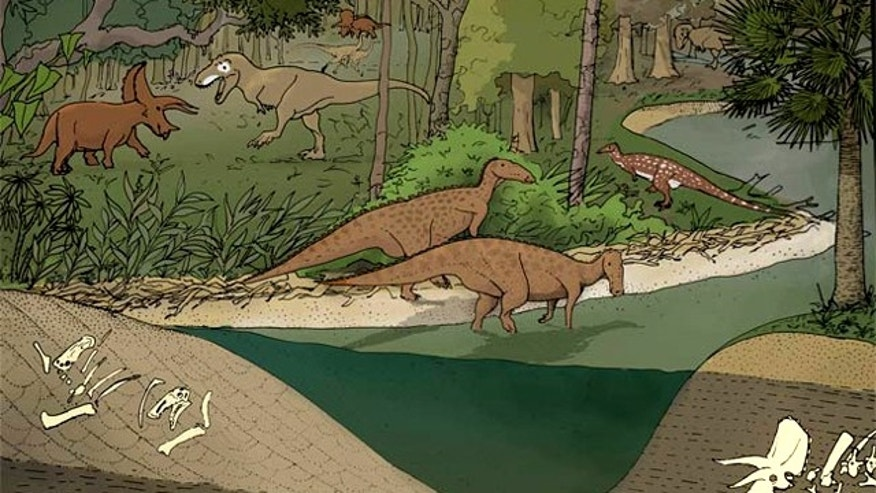 This speculative illustration of the late Cretaceous of North American landscape shows dinosaurs occupying different environments. Hadrosaurs and Thescelosaurus largely occupy environments near river channels, Triceratops occupies environments further away from the river channels, and Tyrannosaurus rex occupies both environments.