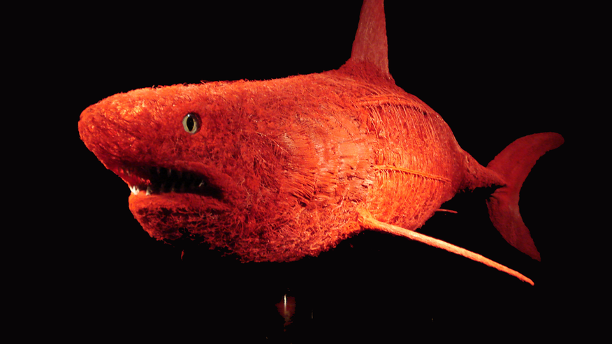 A shark, sans skin, shows blood vessels and gills.