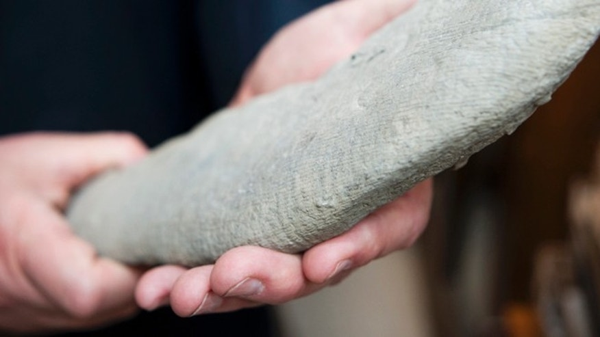 Apr. 24, 2012: A close-up reveals the intriguing texture of the seven-foot-long specimen from the Ordovician period, found by Ron Fine, an amateur paleontologist from Dayton, Ohio.